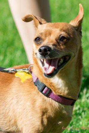 Dog Pita