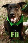 Dog: Eli