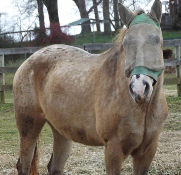 White Bird Appaloosa Horse Rescue