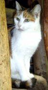 Cat: Paloma