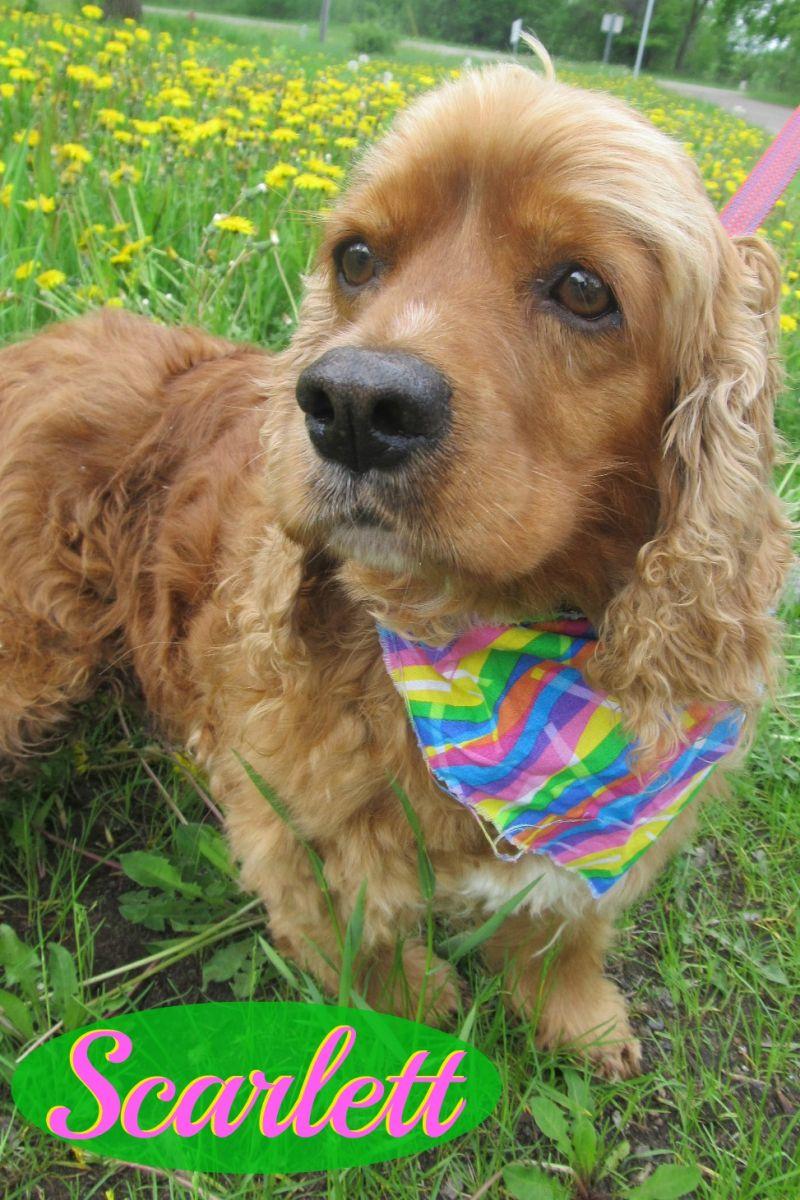 Petango.com Online Pet Adoption & More. Welcome a homeless ...