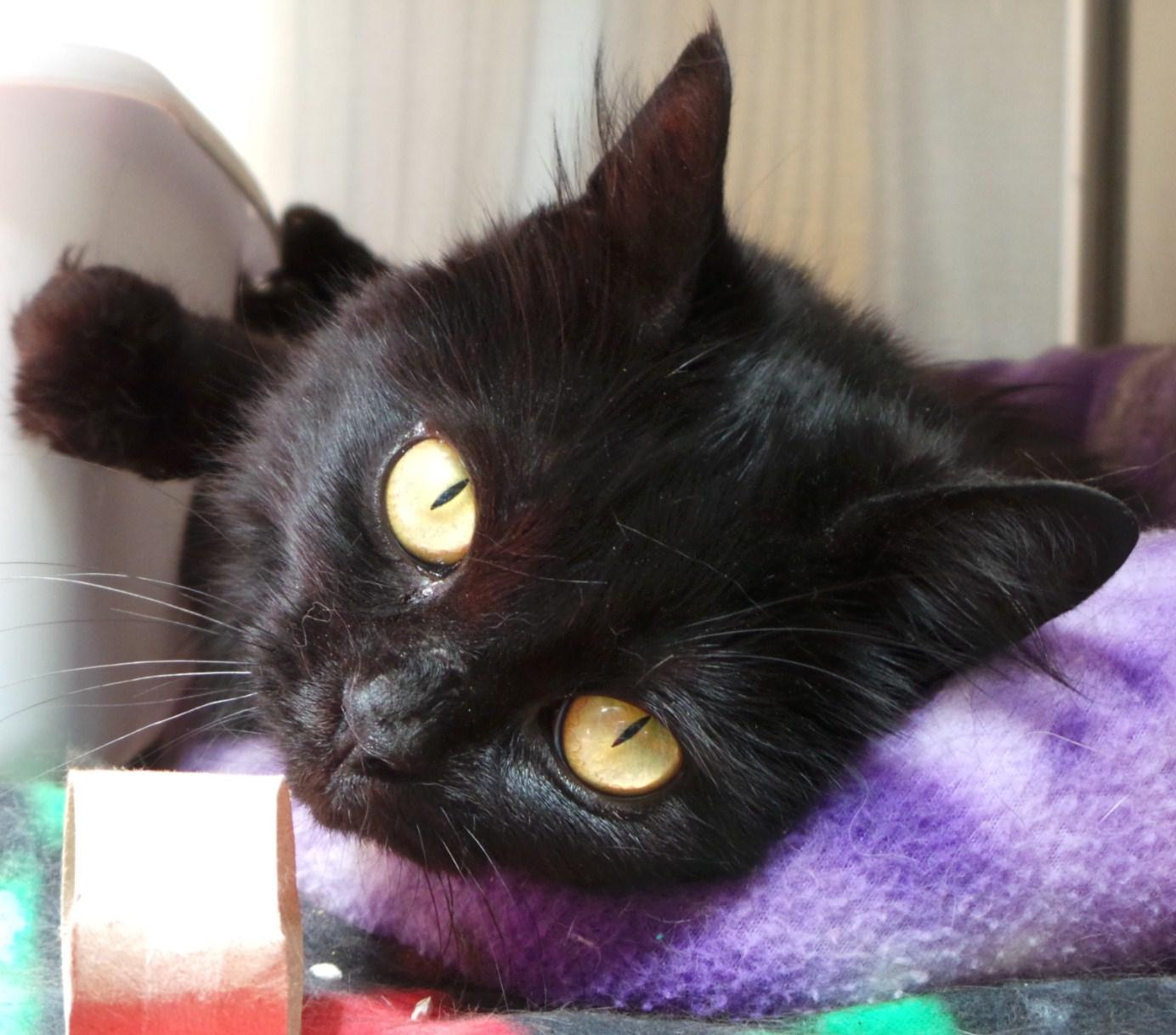 Blackie (in foster)