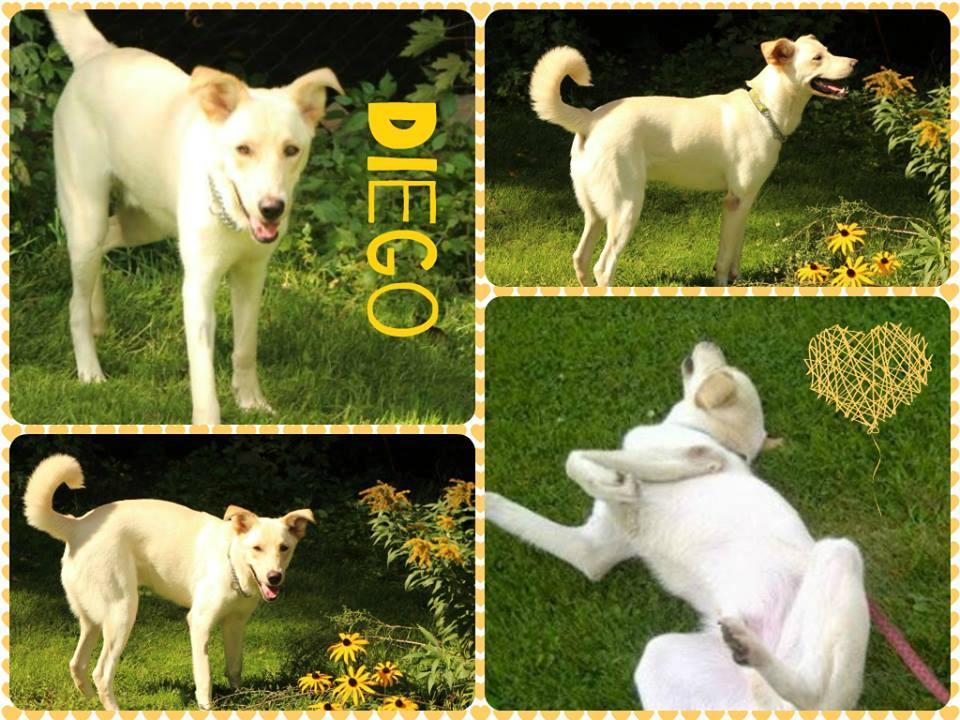 Diego - Hold
