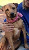 Dog: Rikki
