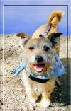 Dog: Jake family dog or fun companion