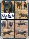 Dog: Parker