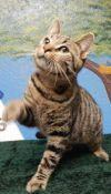 Cat: marcellas