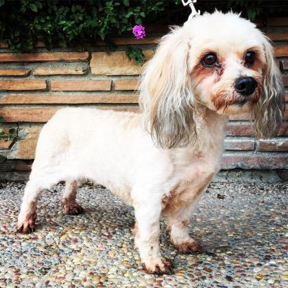 Small Dog Rescue Princeton Nj