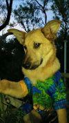 Dog: Bobby Elvis
