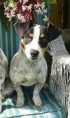 Dog: Shorty (FL)