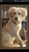 Dog: Marley