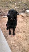 Dog: Rusty