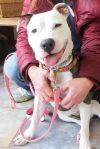 Dog: Stella (OPIN)