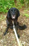 Dog: Black Bear