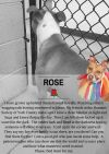Dog: Rose