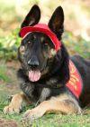 Dog: Hunter Courtesy Post