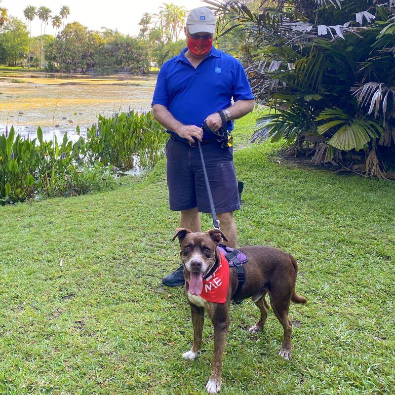 Meet Kisses, a Petfinder adoptable Labrador Retriever Dog ...