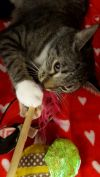 Cat: Bridgette
