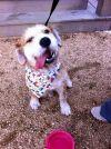 Dog: Murphy