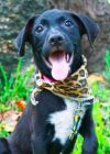 Dog: Burton