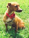 Dog: Anna Belle