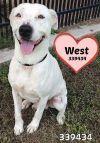 Dog: 339434 West