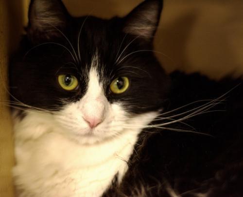 Photo of Tooey