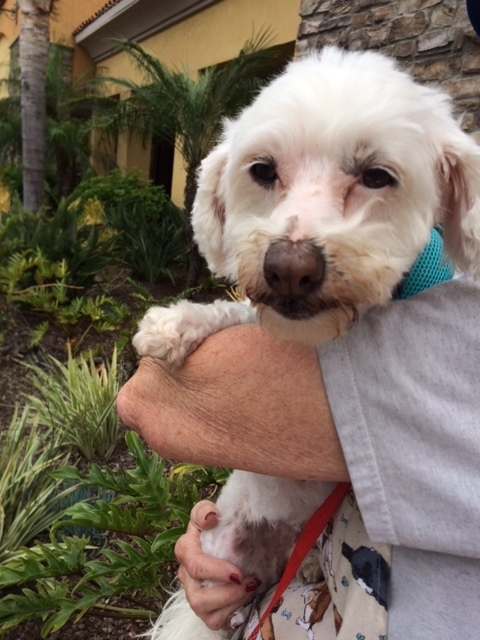 A Safe Haven Dog Rescue Wilmington Ca