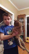 Cat: Theo