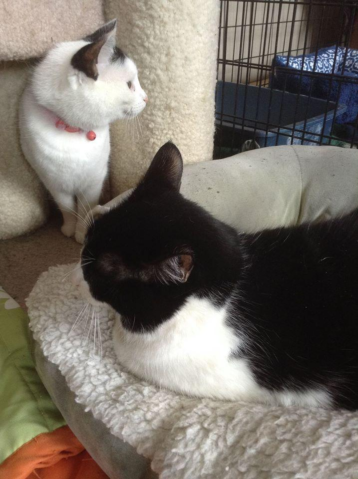 Sylvester and Polly