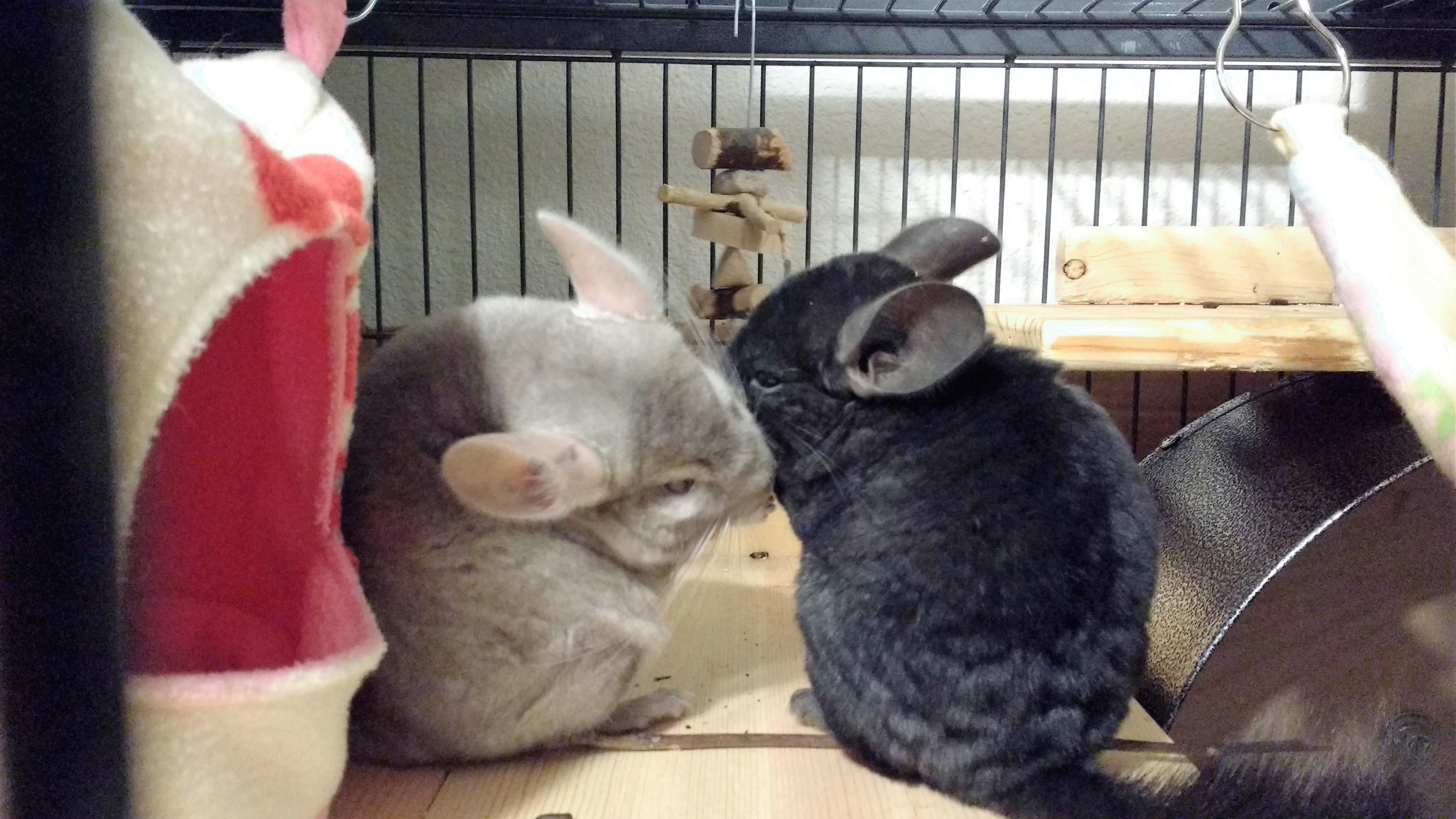 Photo of Xena & Ebby