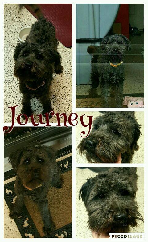 Small Dog Animal Rescue In Princeton