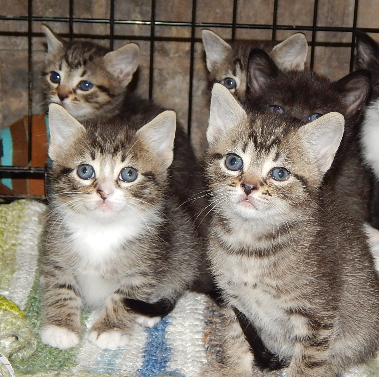 MHF Kittens