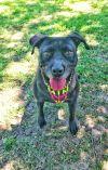Dog: Athena