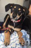 Dog: Bernadette