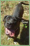 Dog: Tara