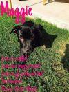 Dog: Maggie