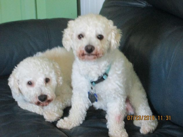 Tommie and Teddie!