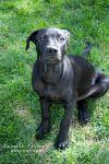Dog: Peekatchewa