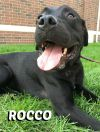 Dog: Rocco
