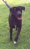 Dog: Duke
