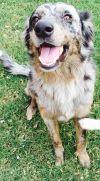 Dog: Micah