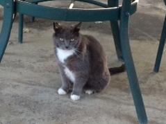 Photo of Barn Cats