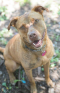 Hennessey is a sweet and loving girl She loves to play and lounge with her favorite volunteers She