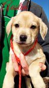 Dog: Austin