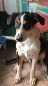 Hound Dog: Bandit