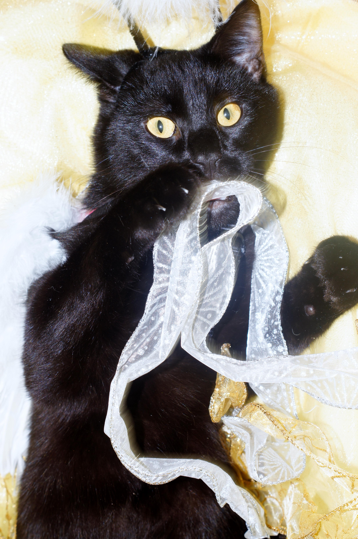 Мулан кот