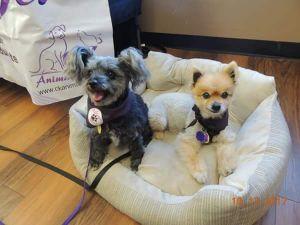Photo of Georgia And Lulu