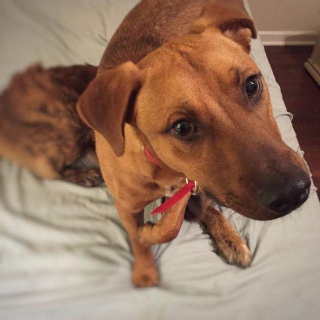Finn- Rocket Matter Shelter Animals of the Week