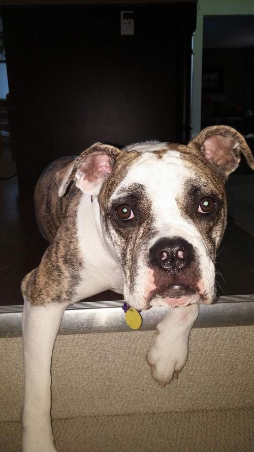 Photo of Harley